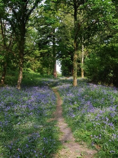 Dorchester dementia friendly walks, Thornecombe Woods